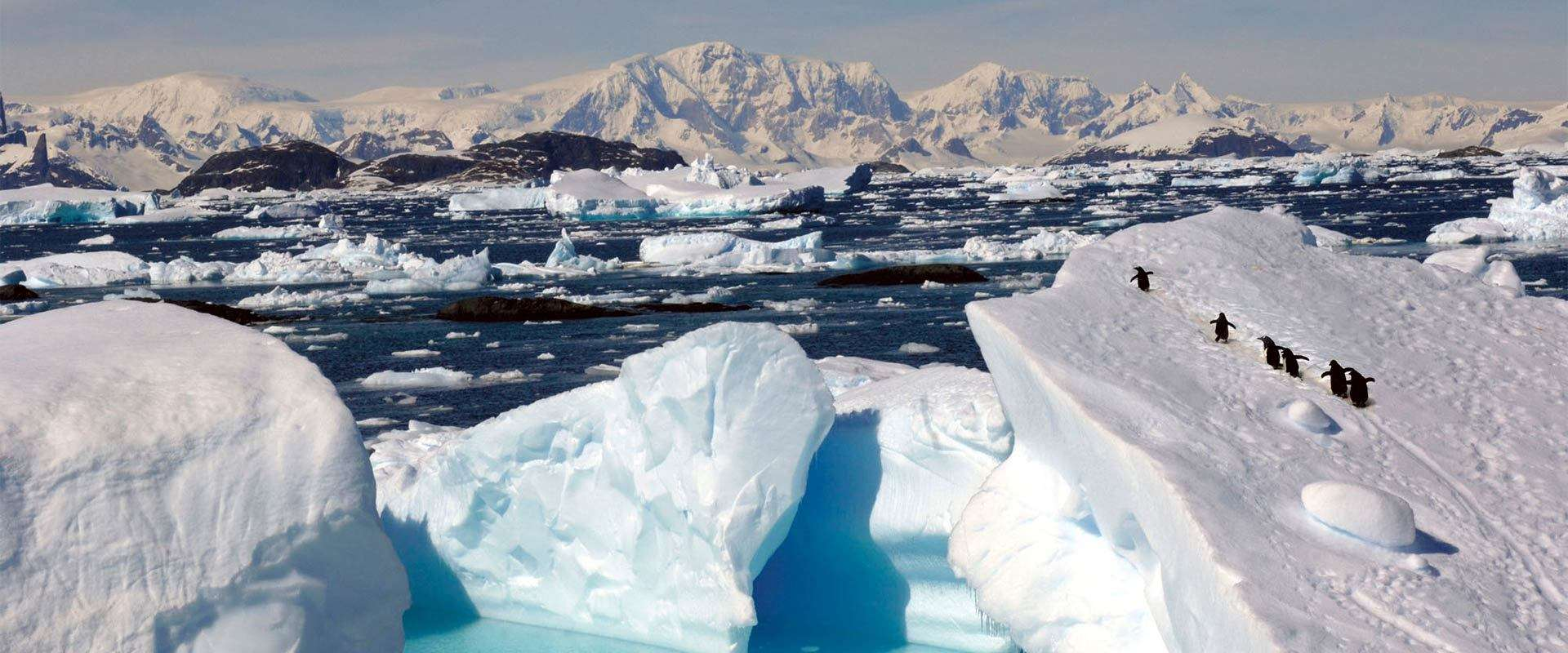 Antarctica South Georgia Amp Falkland Islands