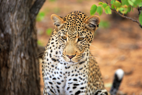 Cox and Kings Brazil: Wonders and Wildlife