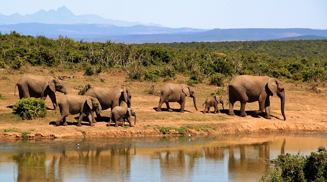 south africa safari the big five