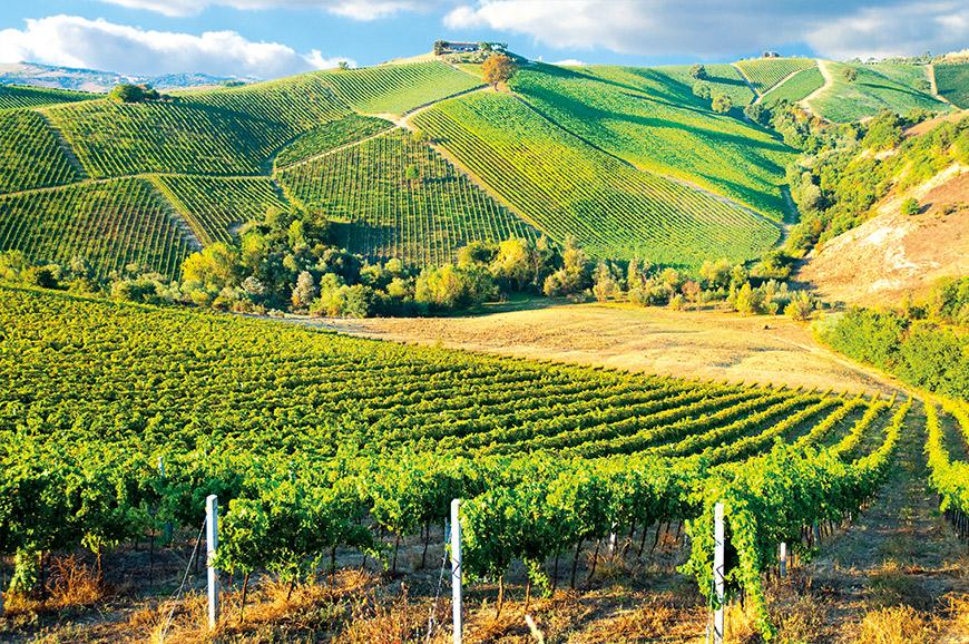 The cinque terre vineyards