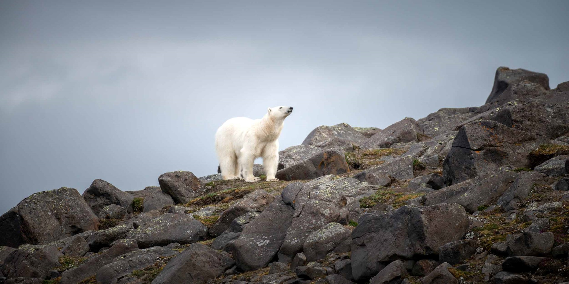 Svalbard - In the Realm of Polar Bears