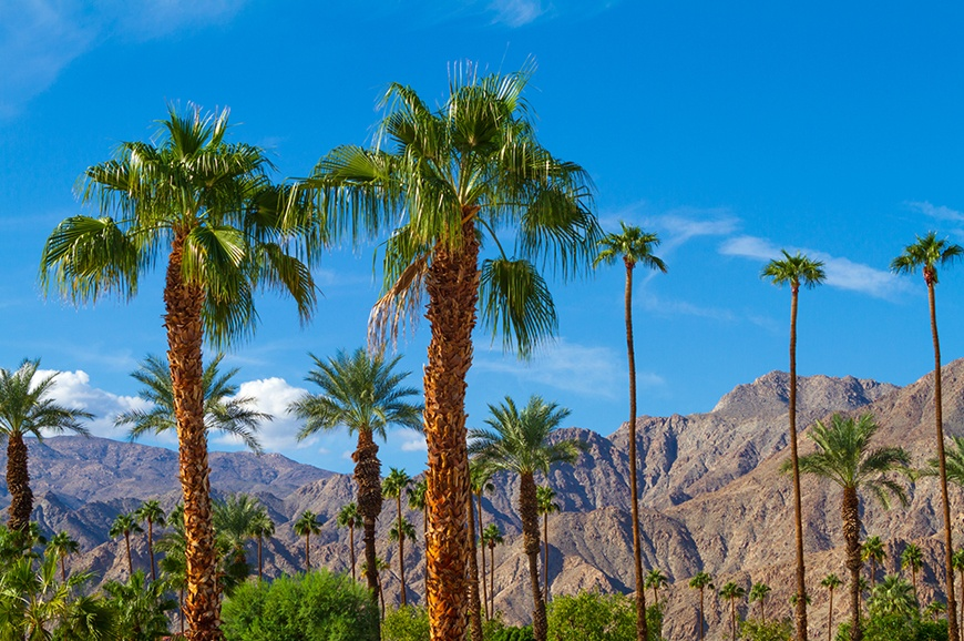 Palm trees before the sky in Palm springs