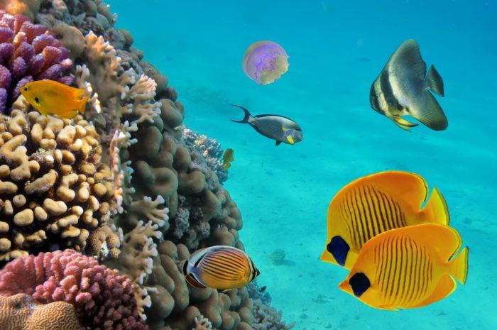 Dominican marine life