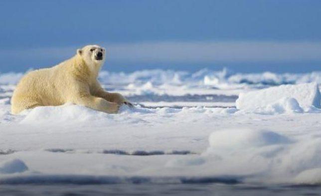 Intrepid travel arctic voyages