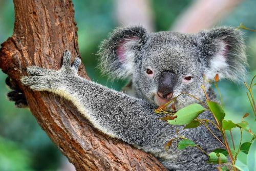 Intrepid travel australia